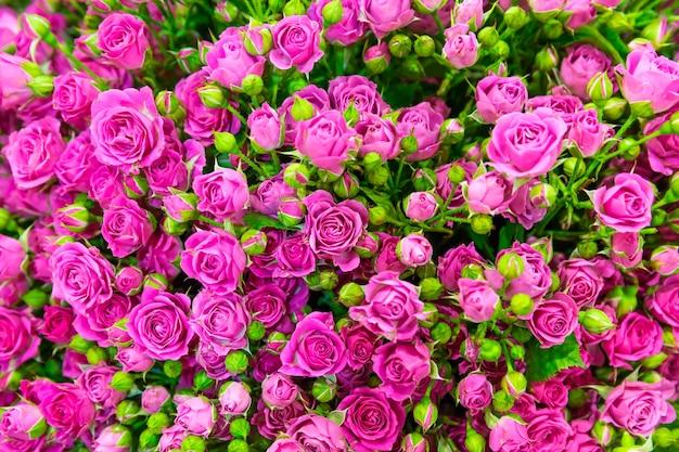 Świeże wiosenne różowe róże w tle