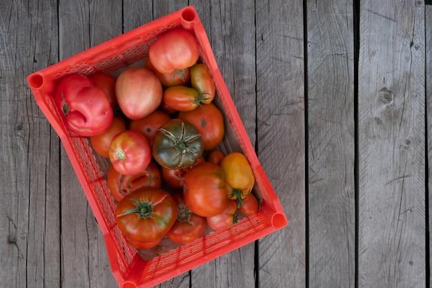 Świeże, zdrowe pomidory są przechowywane w plastikowym pudełku.
