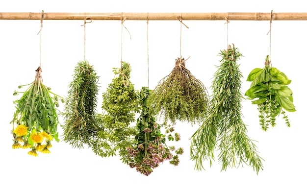 Świeże, zdrowe zioła wiszące na białym tle. rozmaryn, bazylia, tymianek, oregano, majeranek, mniszek lekarski