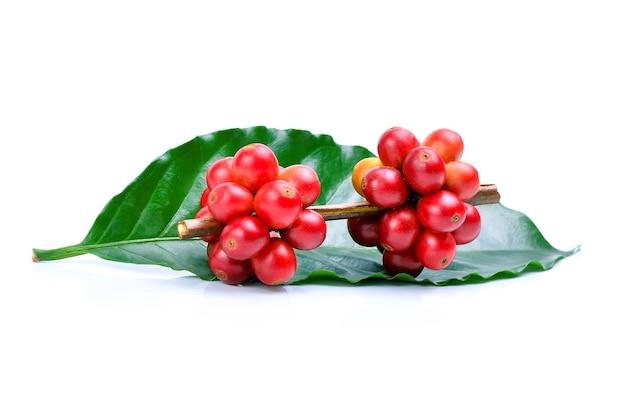 Świeże ziarna kawy na białym tle.