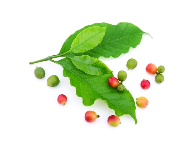 Świeże ziarna kawy z liśćmi na białym tle