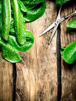 Świeże zielenie ze starymi nożyczkami. na drewnianym tle.