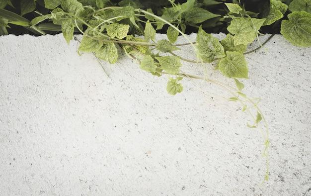 Świeże zielone chwasty na betonowym bruku. naturalne tło z miejsca kopiowania