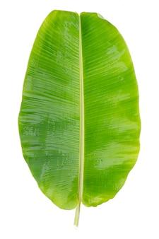 Świeże zielone liście bananowca
