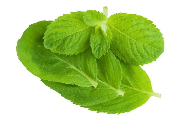 Świeże zielone liście mięty na białym tle na białym tle, widok z góry.
