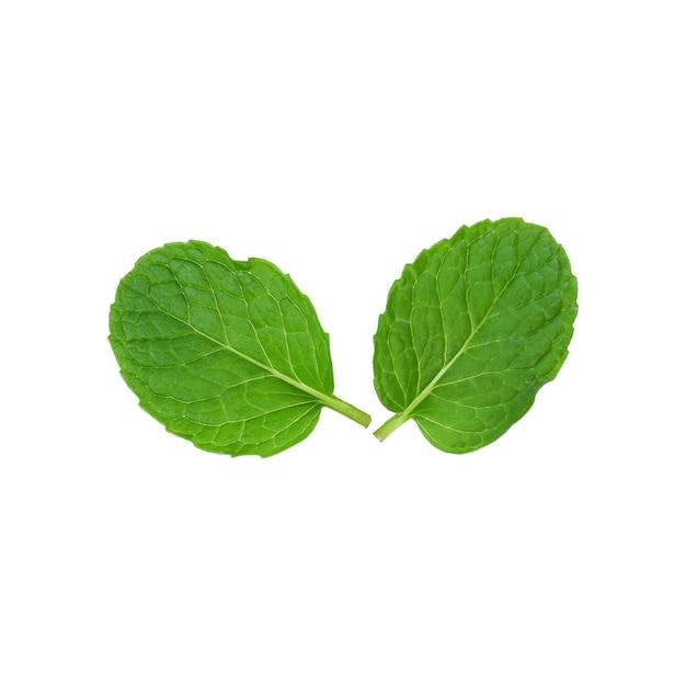 Świeże zielone liście mięty na białym tle