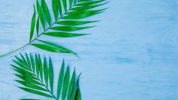 Świeże zielone liście roślin