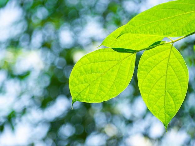 Świeże zielone liście z drzew i światło bokeh