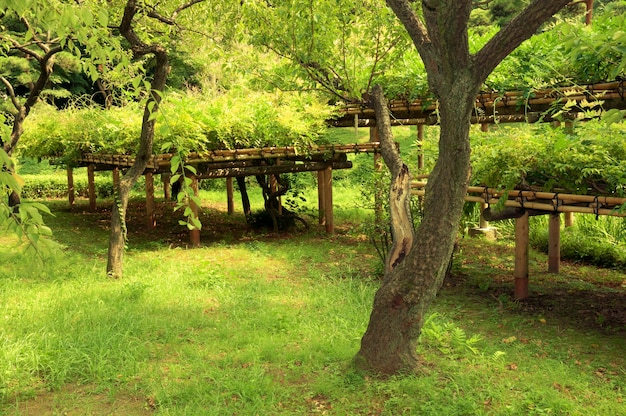 Świeże zielone rośliny w słynnym ogrodzie zen korakuen w tokio latem