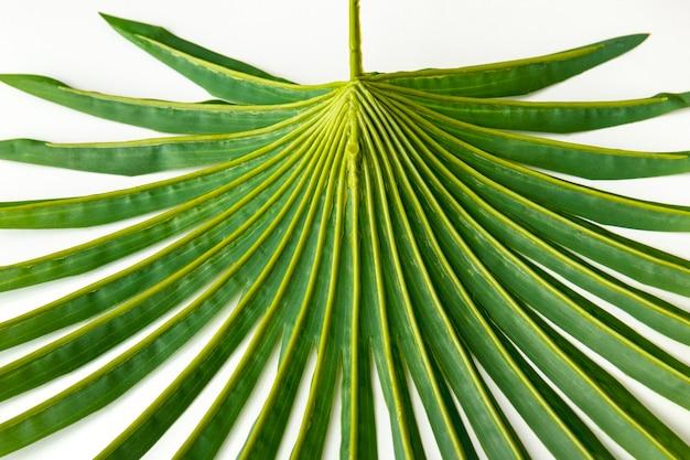 Świeże zielone tło liści palmowych
