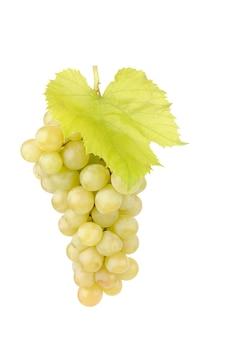 Świeże zielone winogrona z liśćmi na białym tle