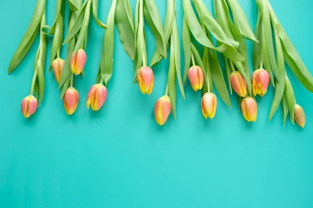 Świeże żółto czerwone tulipany na tle mięty. koncepcja wakacje