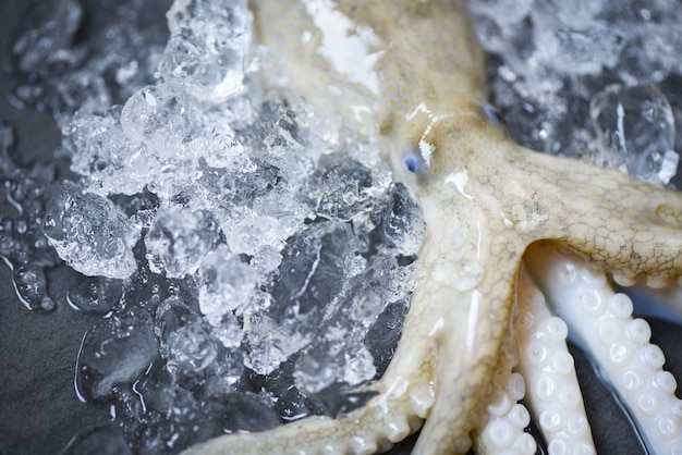 Świeżego ośmiornica oceanu wyśmienita surowa kałamarnica z lodowym ciemnym tłem