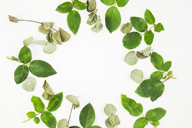 Świezi i susi liście układali w ramie na białym tle