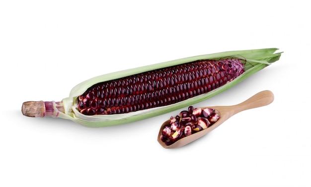 Świezi kukurydzani ucho z liśćmi ustawiają odosobnionego na bielu