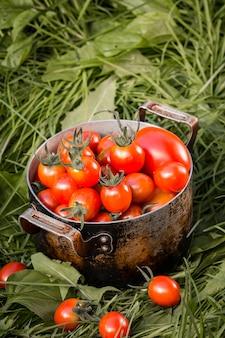 Świezi pomidory w nieociosanym metalu pucharze. zbiory warzyw