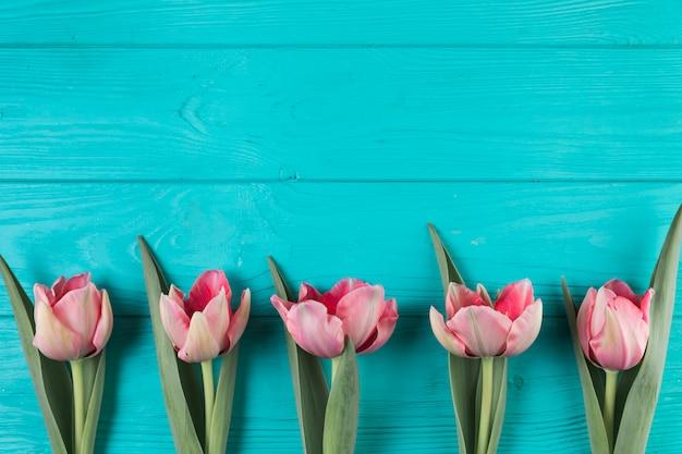 Świezi różowi tulipany na turkusowym drewnianym textured tle