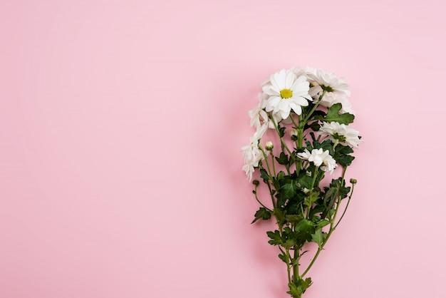 Świezi rumianki po prawej stronie różowego tła. - kopiuj przestrzeń