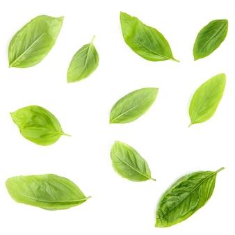 Świezi słodkiego basilu liście odizolowywający na białym tle.
