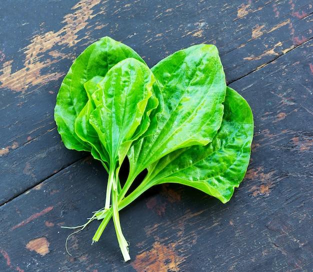 Świezi zieleni liście lecznicza roślina na starym czarnym drewnianym biurku banan (plantago ważny)