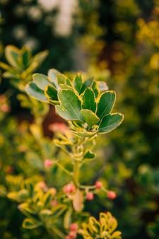 Świezi zieleni liście roślina w ogródzie