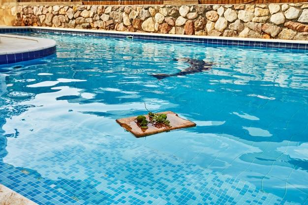 Świezi zieleni niedojrzali winogrona, mandarynki i mango na drewnianym tle w błękitne wody