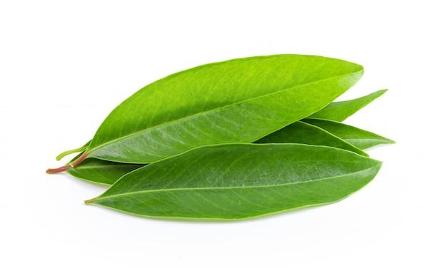 Świezi zielona herbata liście i suszą na biel ścianie