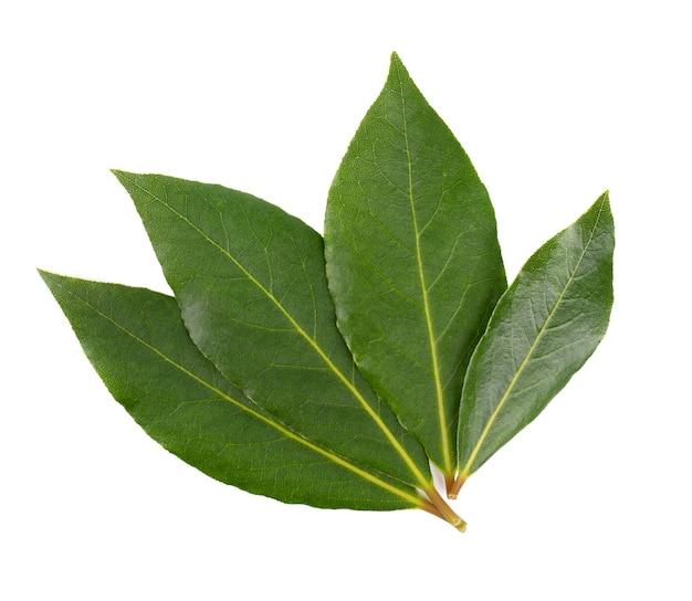 Świezi zielona zatoka liście na białym tle