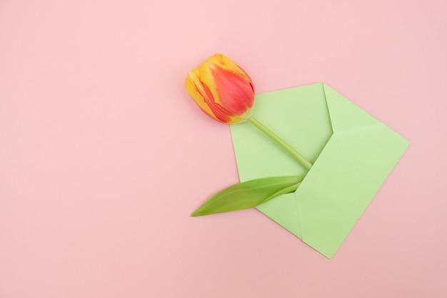 Świezi żółto-czerwone tulipany na różowym tle.