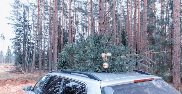Świeżo cięta naturalna jodła na świąteczną dekorację świąteczną, symbol rodzinnego wydarzenia na szczycie samochodu!