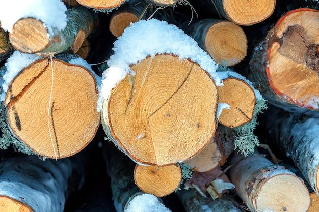Świeżo ścięte kłody i drewno opałowe z drwali zanurzonych pod kocem białego śniegu w sezonie zimowym.