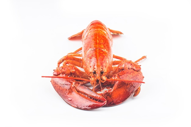 Świeżo ugotowany homar z bostonu?