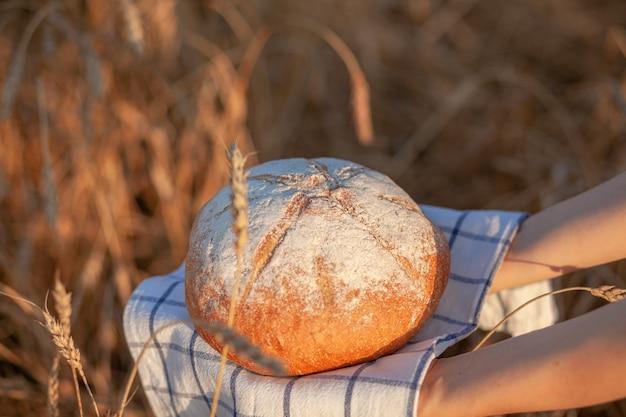 Świeżo upieczony bochenek chleba na polu pszenicy lub żyta. kobieta trzyma bochenek żyta, świeży chleb na tle pszennych kłosów. chleb żytni pełnoziarnisty na serwetce w kratkę