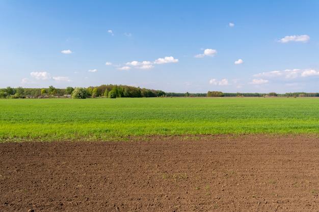 Świeżo zasiane pole z młodymi kiełkami upraw