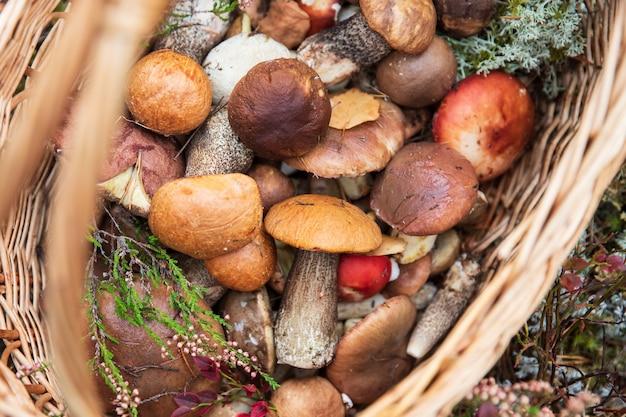 Świeżo zebrane leśne grzyby ozdobione gałązkami dzikiego wrzosu w wiklinowym koszu jesienne hobby