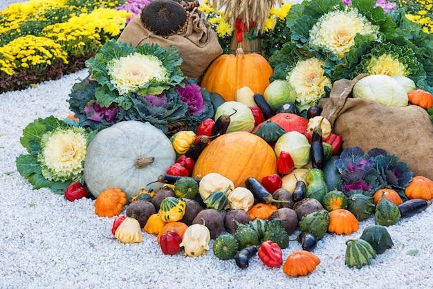 Świeżo zebrane letnie warzywa wśród klombów. duży skład jesiennych zbiorów na zewnątrz.