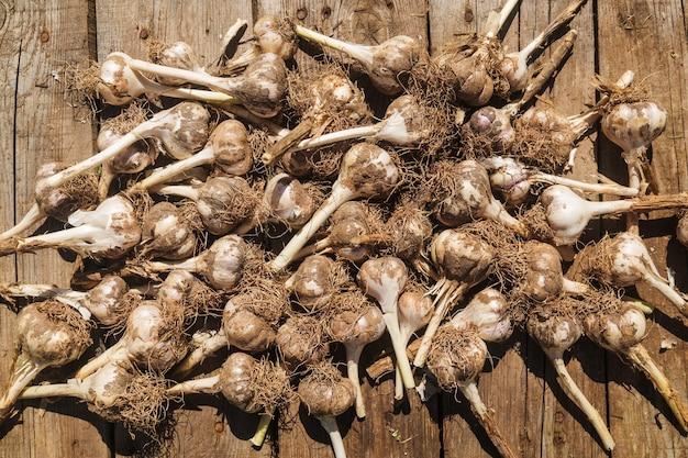 Świeżo zebrany czosnek z grudkami ziemi na drewnianej podłodze z bliska. jedzenie, żniwa.