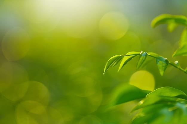 Świeżość zielonych liści na zielonym tle bokeh