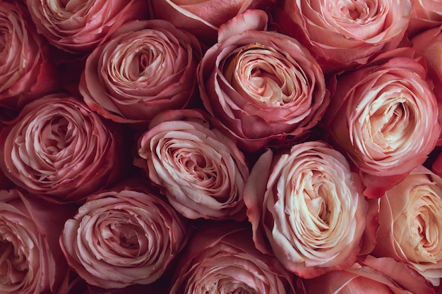 Świeży bukiet różowych róż lub piwonii w zbliżeniu bukietu ślubnego