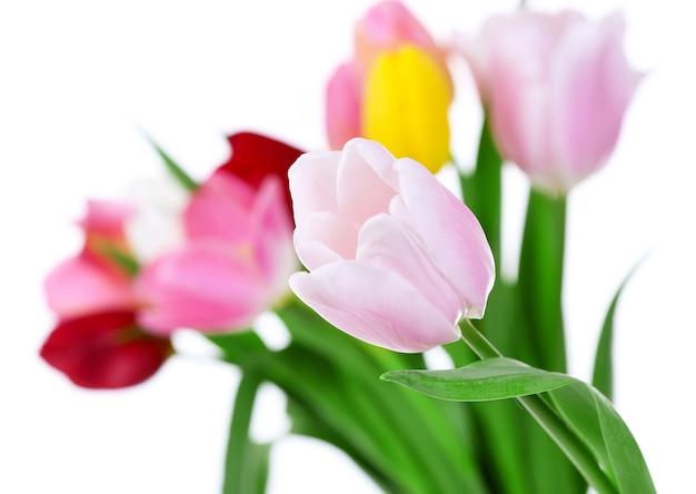 Świeży bukiet z tulipanów na niewyraźne