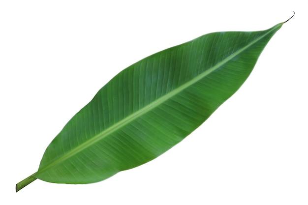 Świeży cały liść banana na białym tle