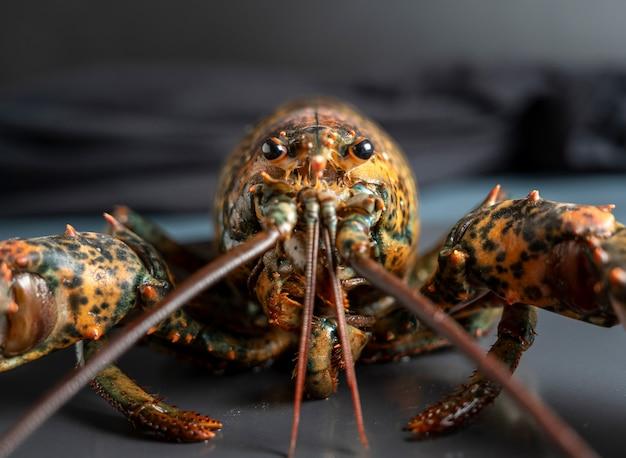 Świeży homar makro zbliżenie, skupić się na oczach