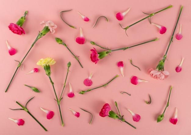 Świeży kwiat goździka, dianthus lub wzór schabaud