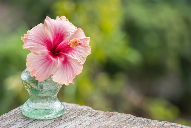 Świeży kwiat hibiskusa na powierzchni przyrody.
