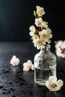 Świeży ładny wiśniowy kwiat w szklanej butelce na czarnym tle