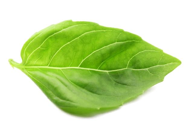 Świeży liść bazylii na białym tle