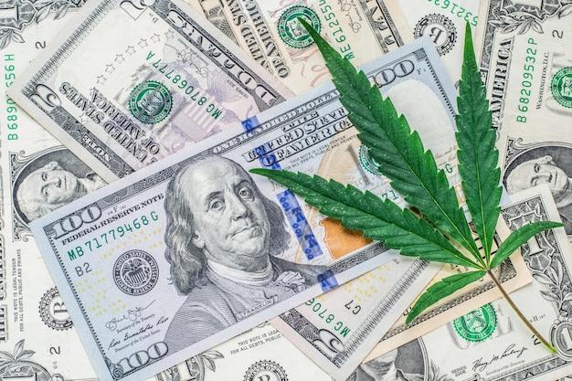 Świeży liść konopi w dolarach. pieniądze. kopia przestrzeń. widok z góry