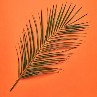 Świeży liść palmowy przedstawiony na pomarańczowym tle z miejsca na kopię. naturalny układ. płaskie ułożenie
