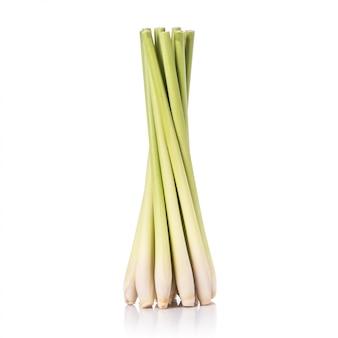 Świeży liść trawy cytrynowej lub trawy cytrynowej.