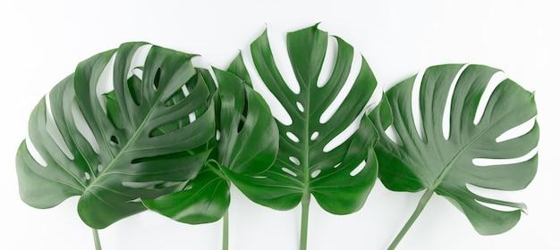 Świeży naturalny zielony monstera pozostawia kreatywny układ ramki